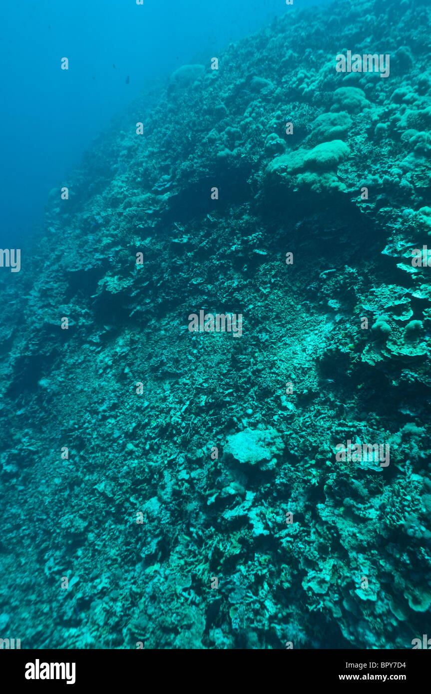Reef damaged by fish bombing, a highly destructive fishing practice, Cendrewasih Bay, West Papua, Indonesia. - Stock Image