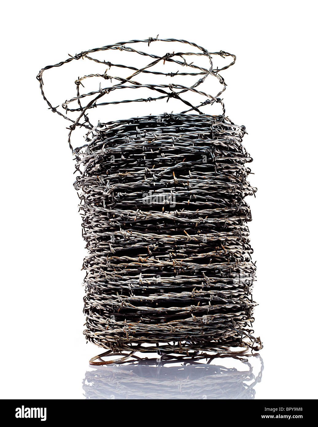 coiled barbed wire on a white background. - Stock Image