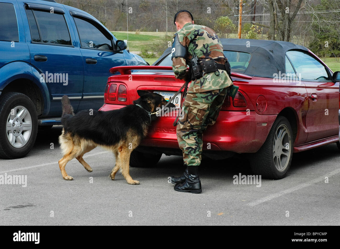 Drug Sniffing Dog Stock Photos & Drug Sniffing Dog Stock ...