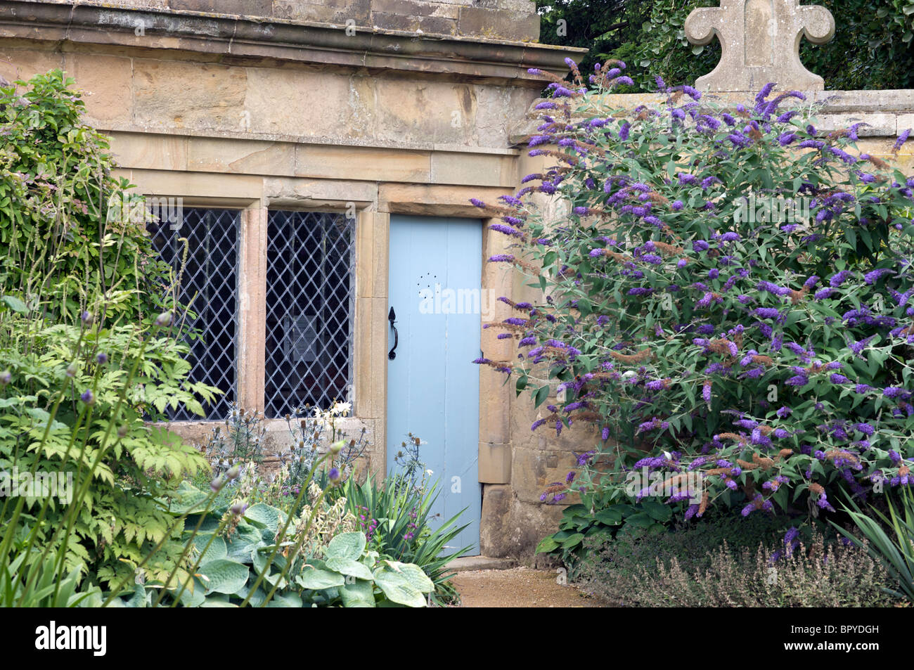 blue door with buddleia - Stock Image