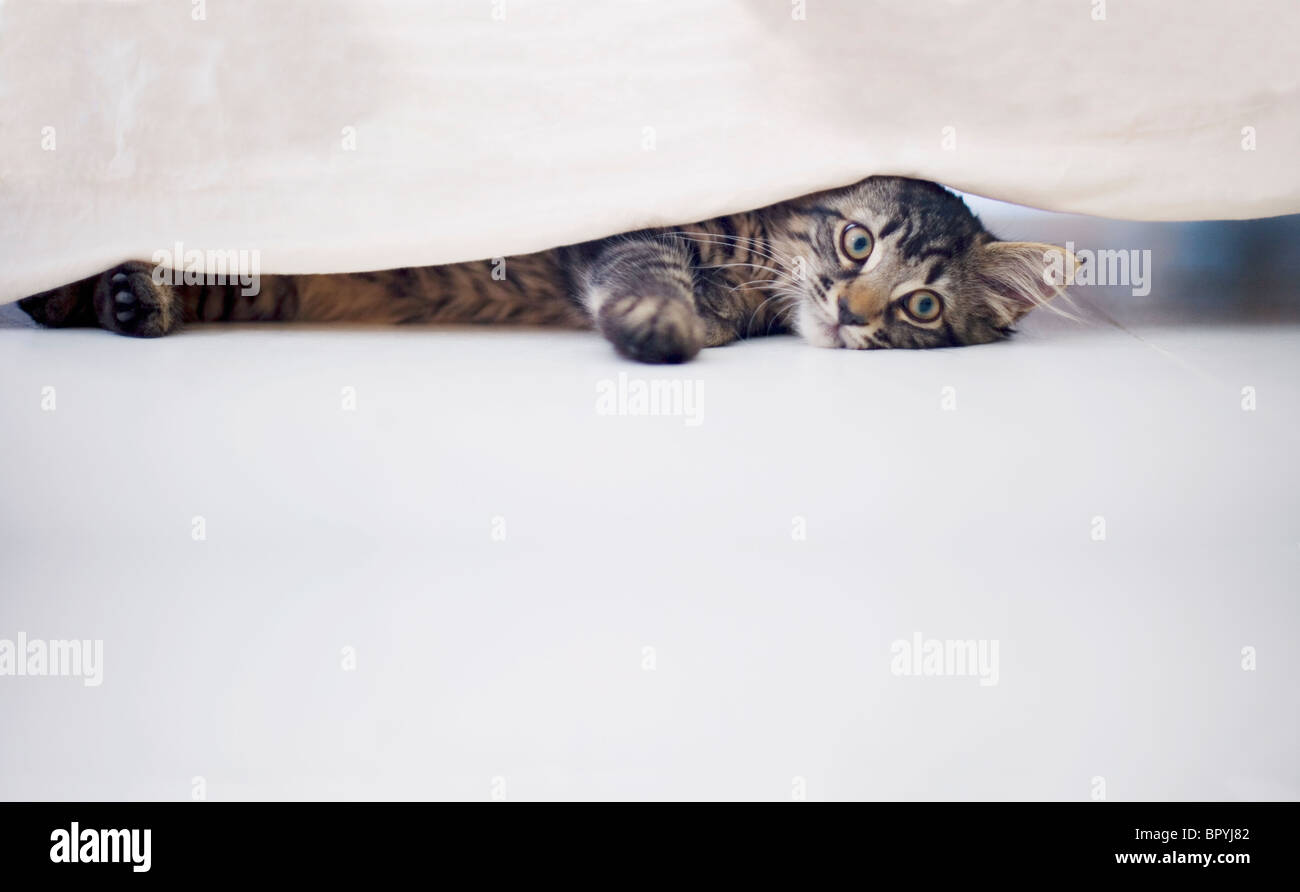 A kitten playing with dovet cover under a bed. - Stock Image