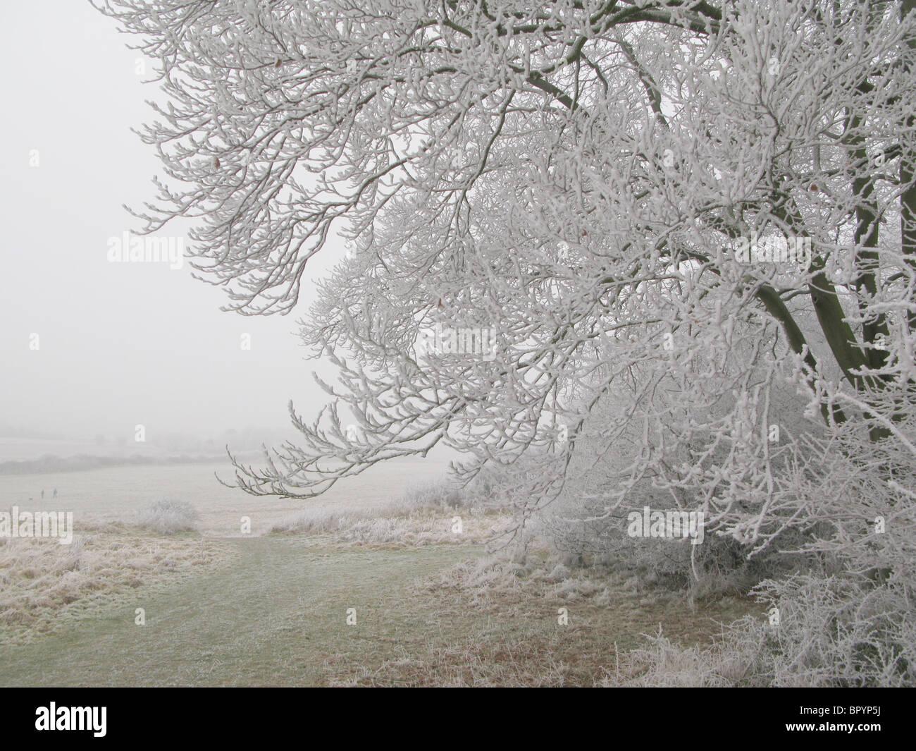 Hoar frost on Wittenham Clumps - Stock Image