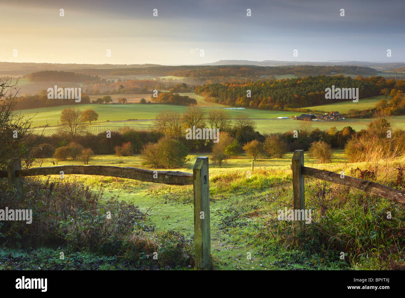 Morning sunlight shining over the North Downs, Newlands Corner - Stock Image