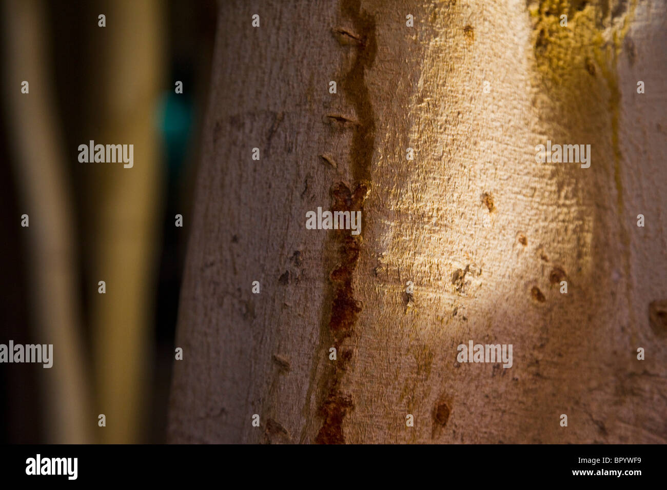Closeup of a tree's stamp - Stock Image