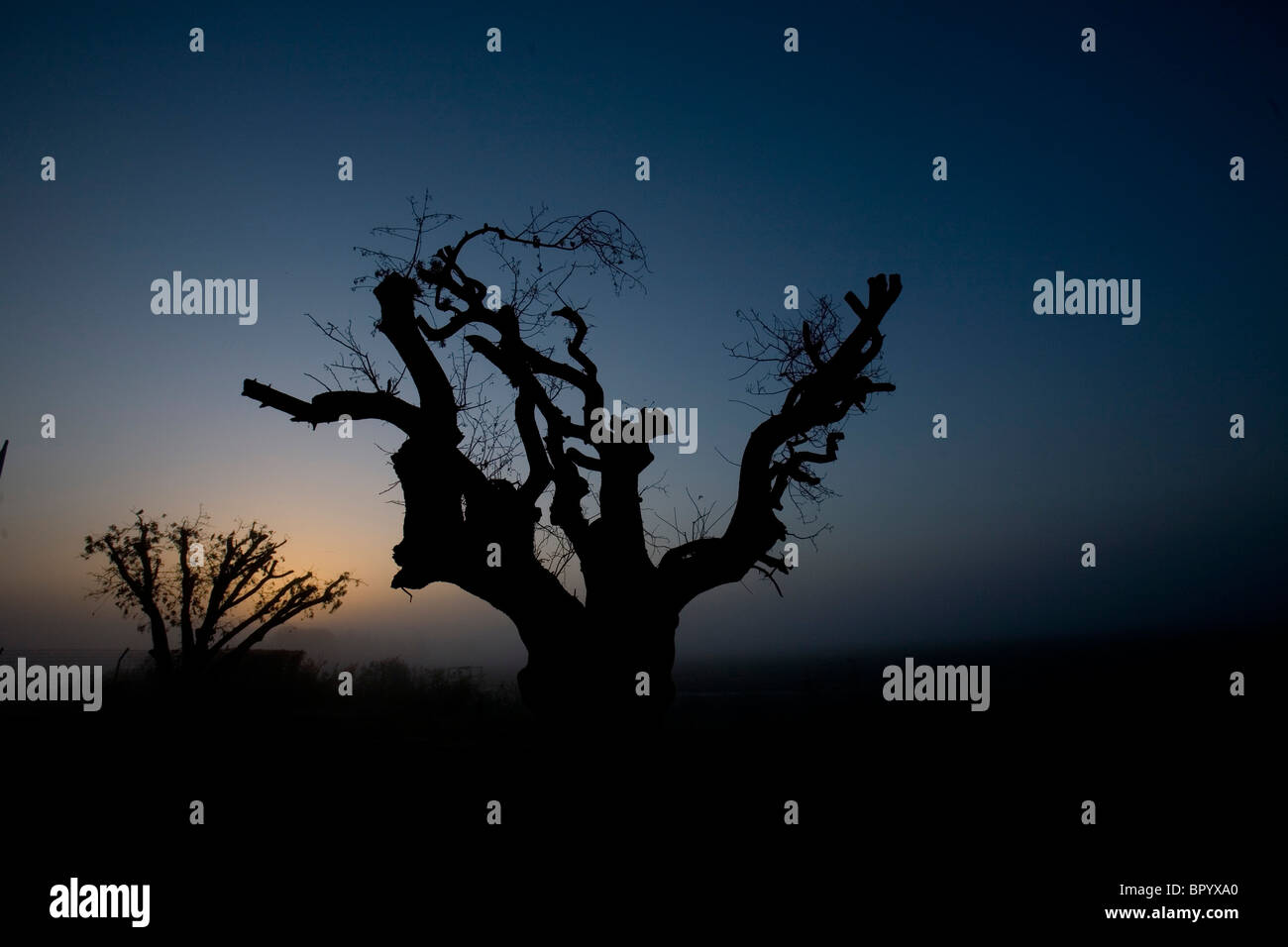 Photograph of the silhouette of a tree stump at dusk - Stock Image
