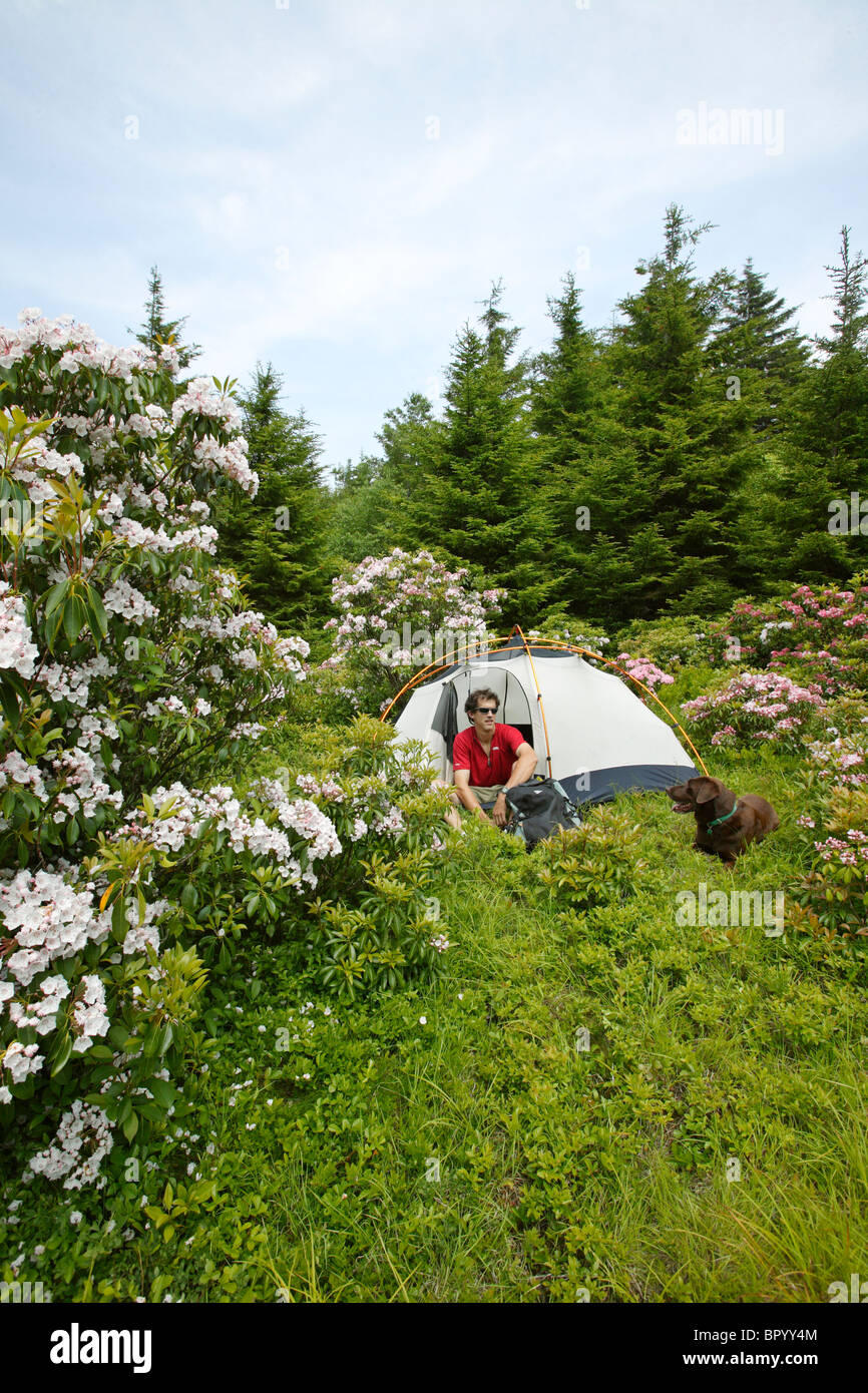 Male hiker with dog at campsite amidst blooming mountain laurel in the Dolly Sods Wilderness Area, WV. - Stock Image