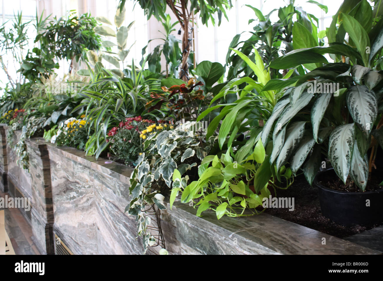 Awe Inspiring Green Plants Indoor Garden Greenhouse Palm Room Stock Photo Complete Home Design Collection Barbaintelli Responsecom