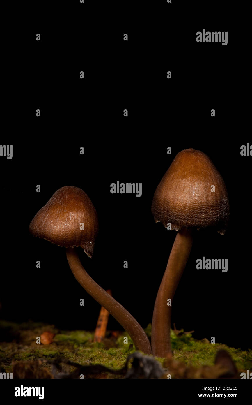 Fungi growing on at rotten stump at Evje in Rygge, Norway - Stock Image