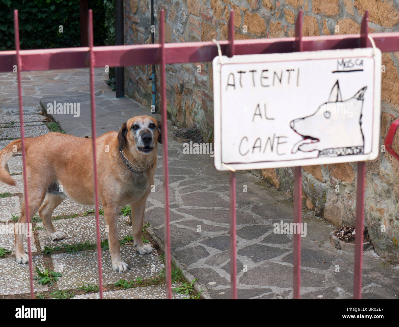 A warning sign on a gate, warning of a vicious dog in Italian language, saying beware of the dog. - Stock Image