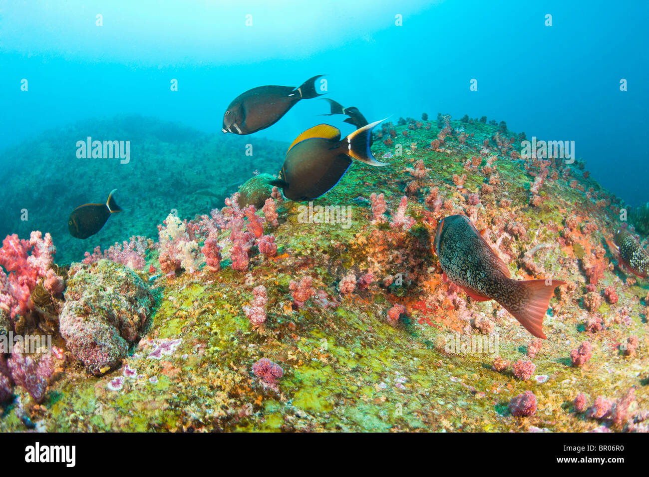 Scuba diving at Similan Islands Underwater Park, Thailand, SE Asia Stock Photo