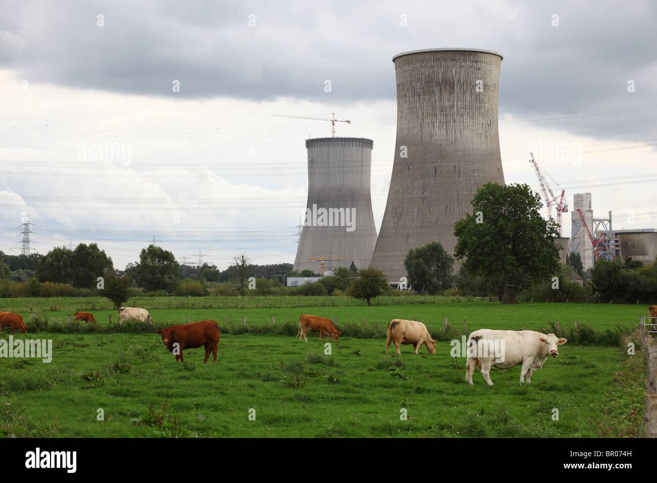 Cows on a meadow in front of nuclear power station Stock Photo