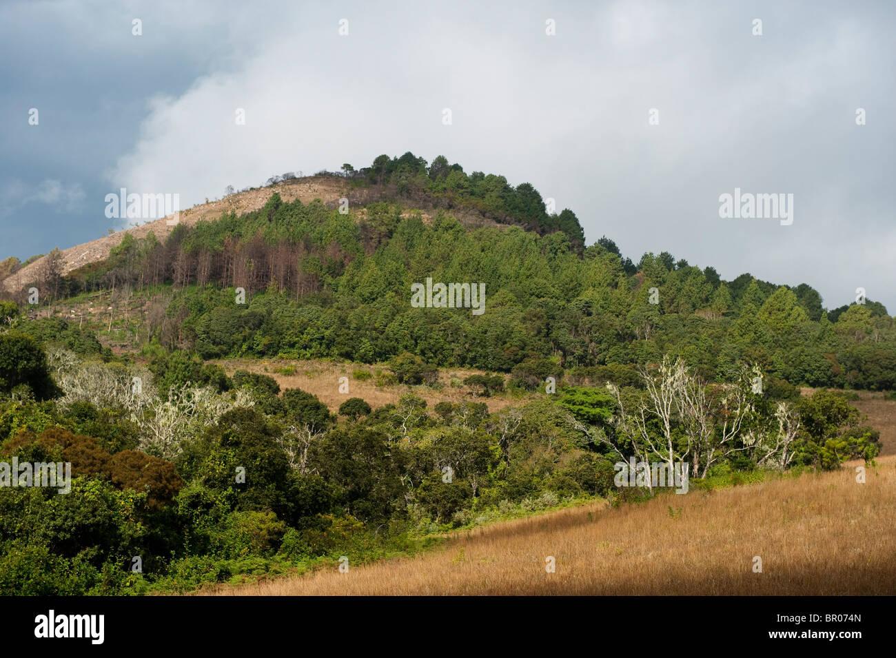 Zomba plateau, Malawi - Stock Image
