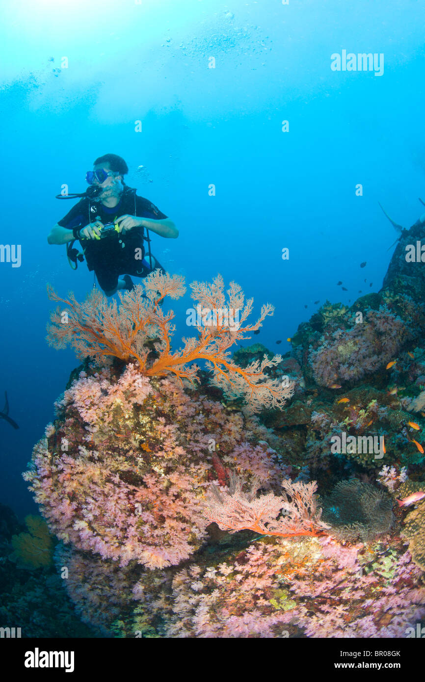 scuba divers at Similan Islands Underwater Park, Thailand, SE Asia - Stock Image