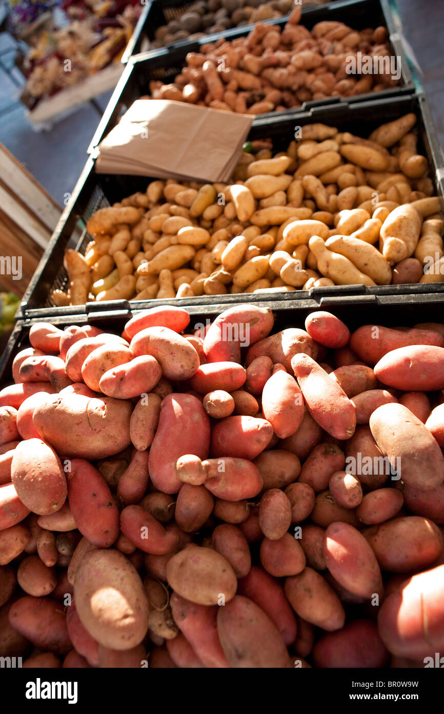 organic farmers market, variety of potato for sale - Stock Image