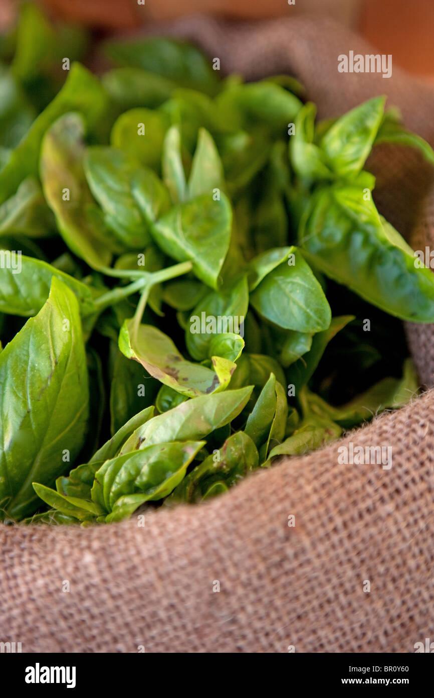 fresh organic basil in a burlap sack, herb ingredient closeup - Stock Image