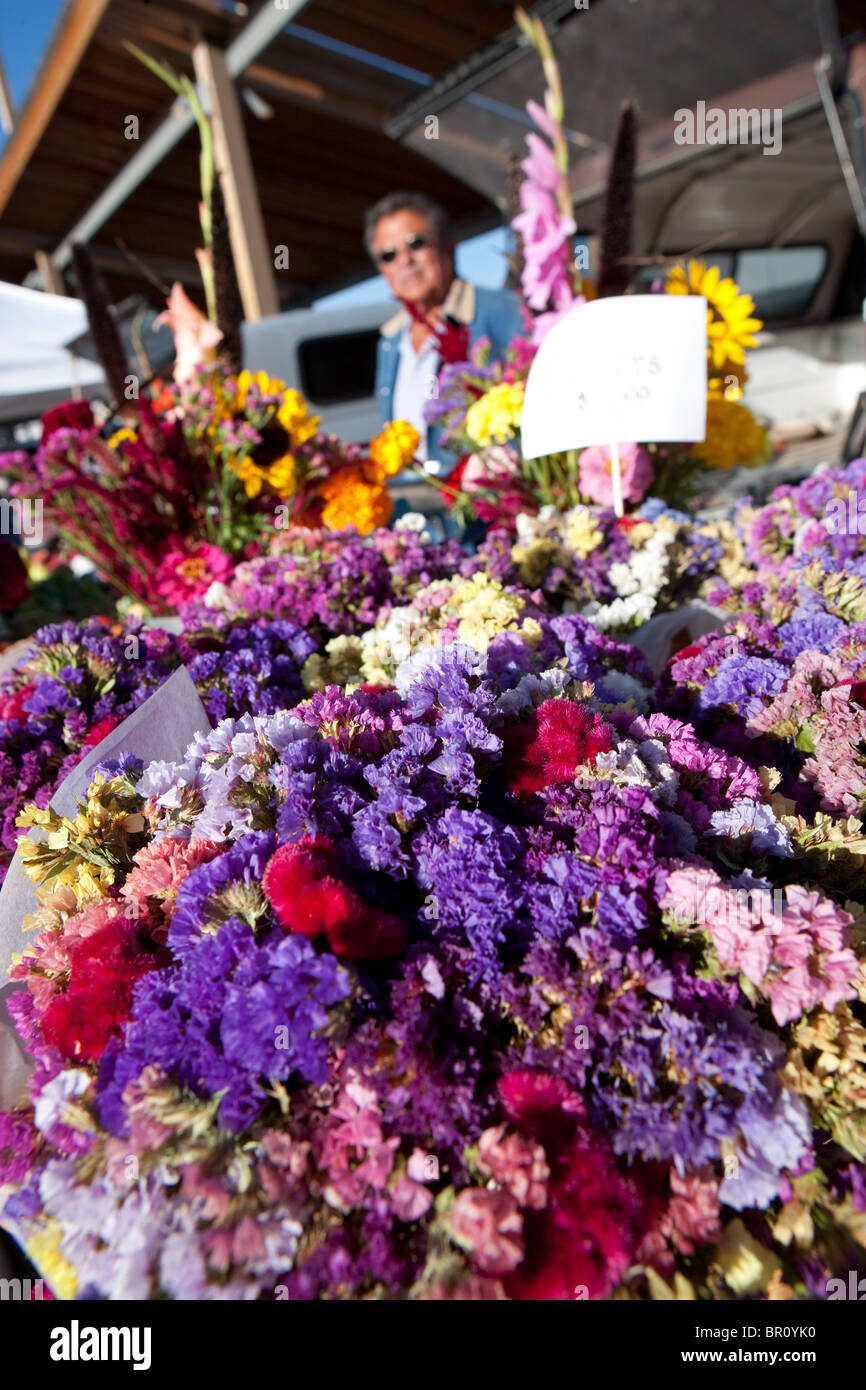 man selling statice flowers grown in northern new mexico, USA at Farmers Market, Santa Fe - Stock Image