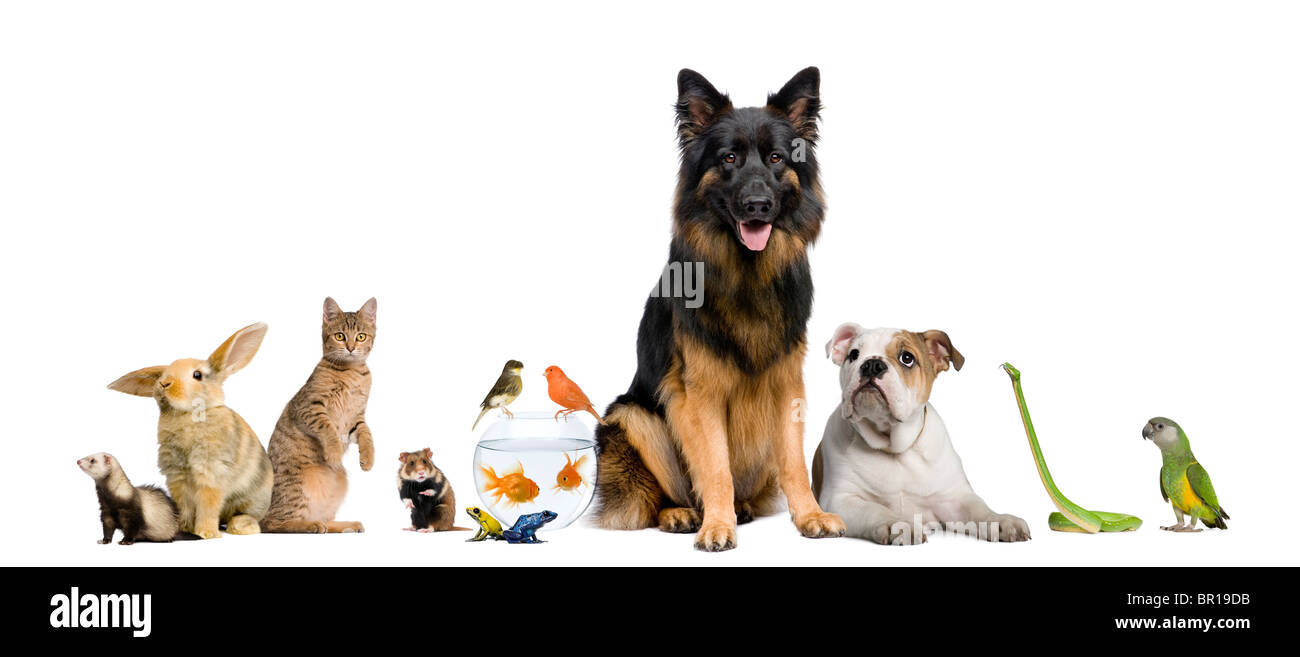 Group of pets together in front of white background - Stock Image