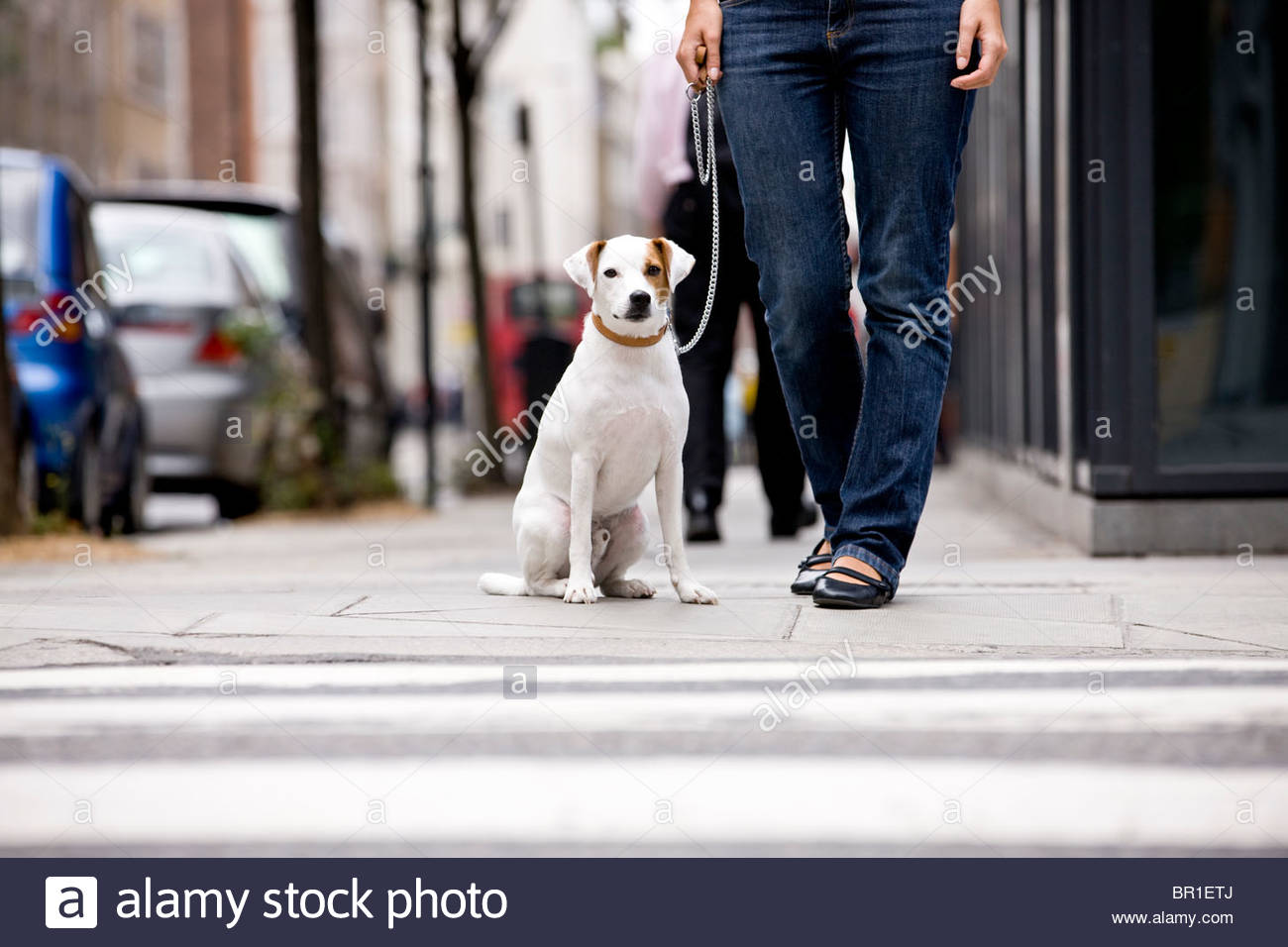 A young woman and her dog waiting to cross the road - Stock Image