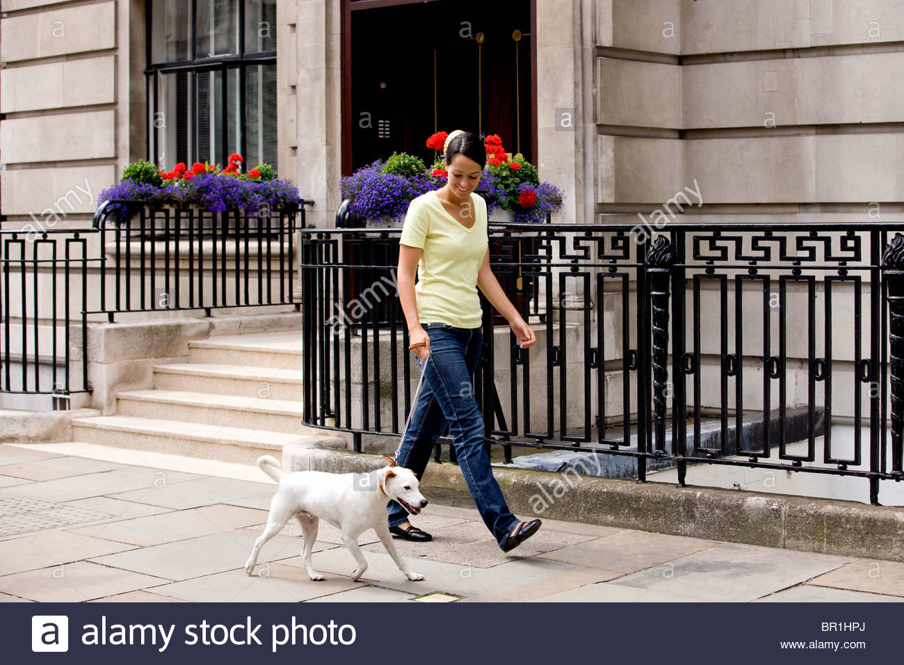 A young woman walking her dog in the street - Stock Image