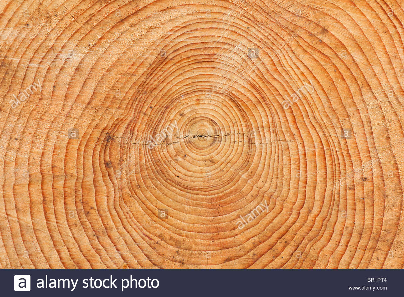 Tree rings. Cross section of a Sawn tree trunk. Pattern. - Stock Image