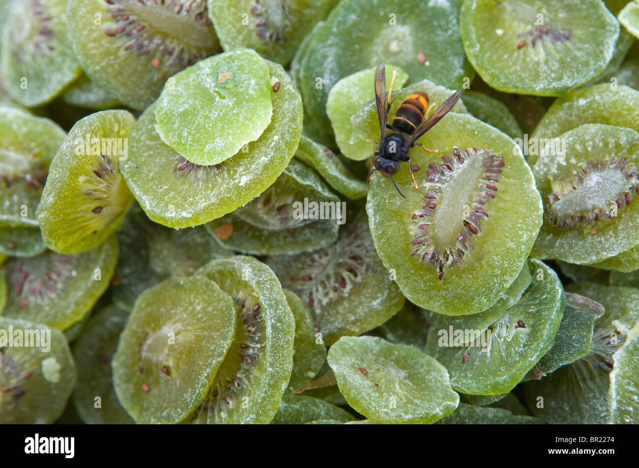 A honey bee enjoys candied and dried kiwi at roadside vegetable stand, Sichuan Province, China - Stock Image