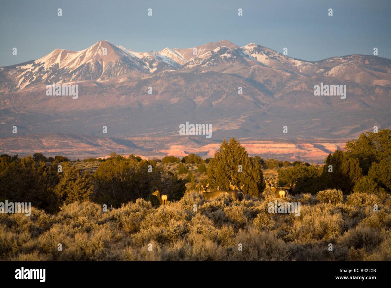 deer, Utah - Stock Image