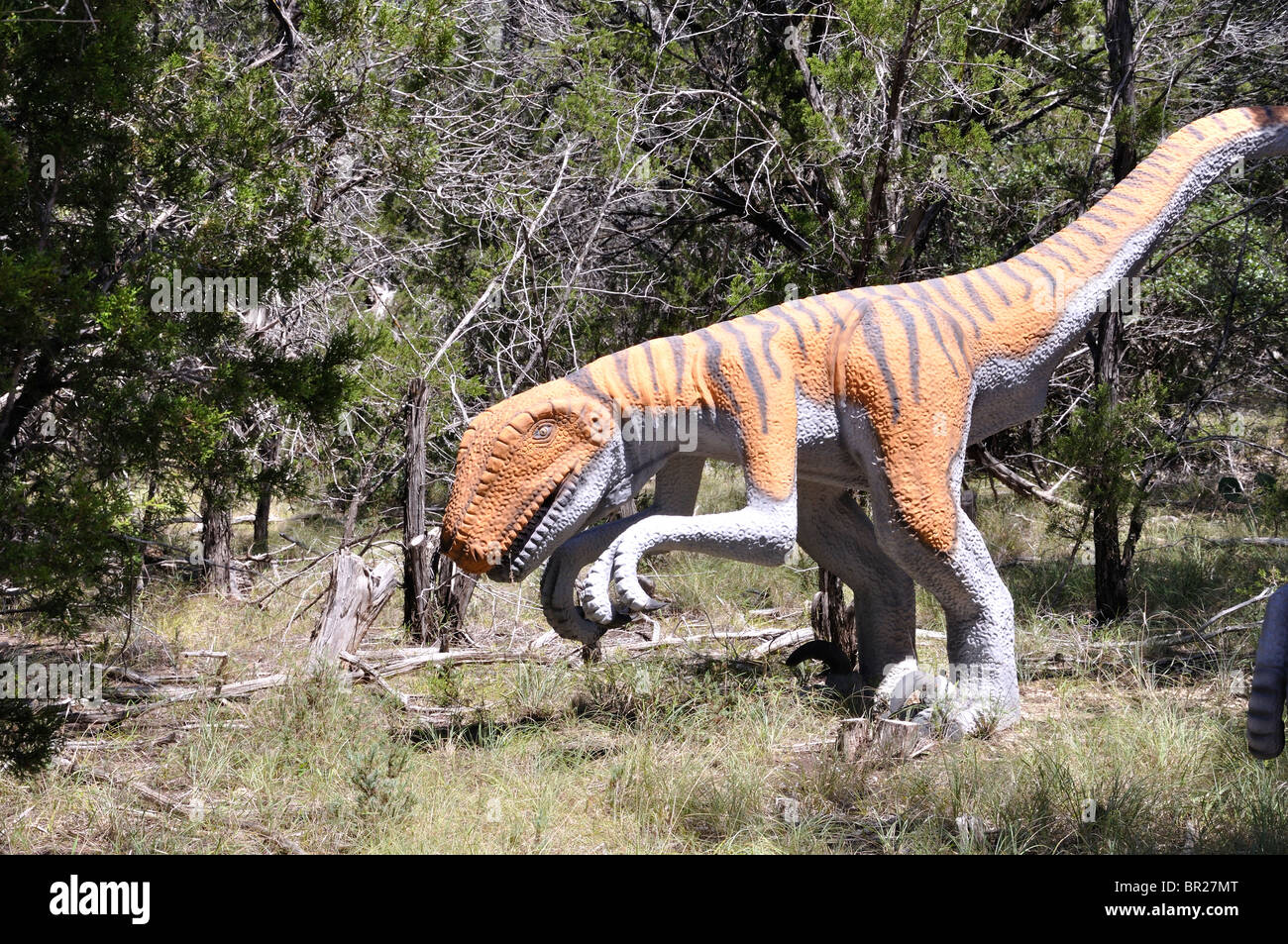 Deinonychus, Dinosaur World, Glen Rose, Texas, USA - Stock Image