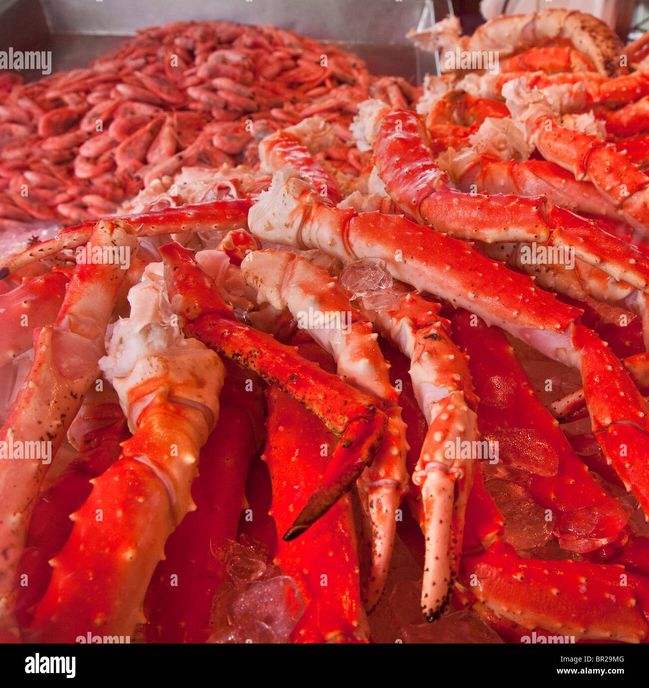Spider crabs on sale at Bergen fish, sea food market, Norway - Stock Image
