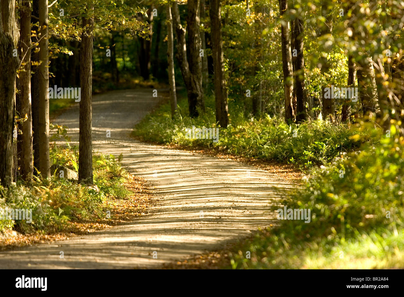 A dirt road winds through woods near Woodstock, Connecticut. - Stock Image