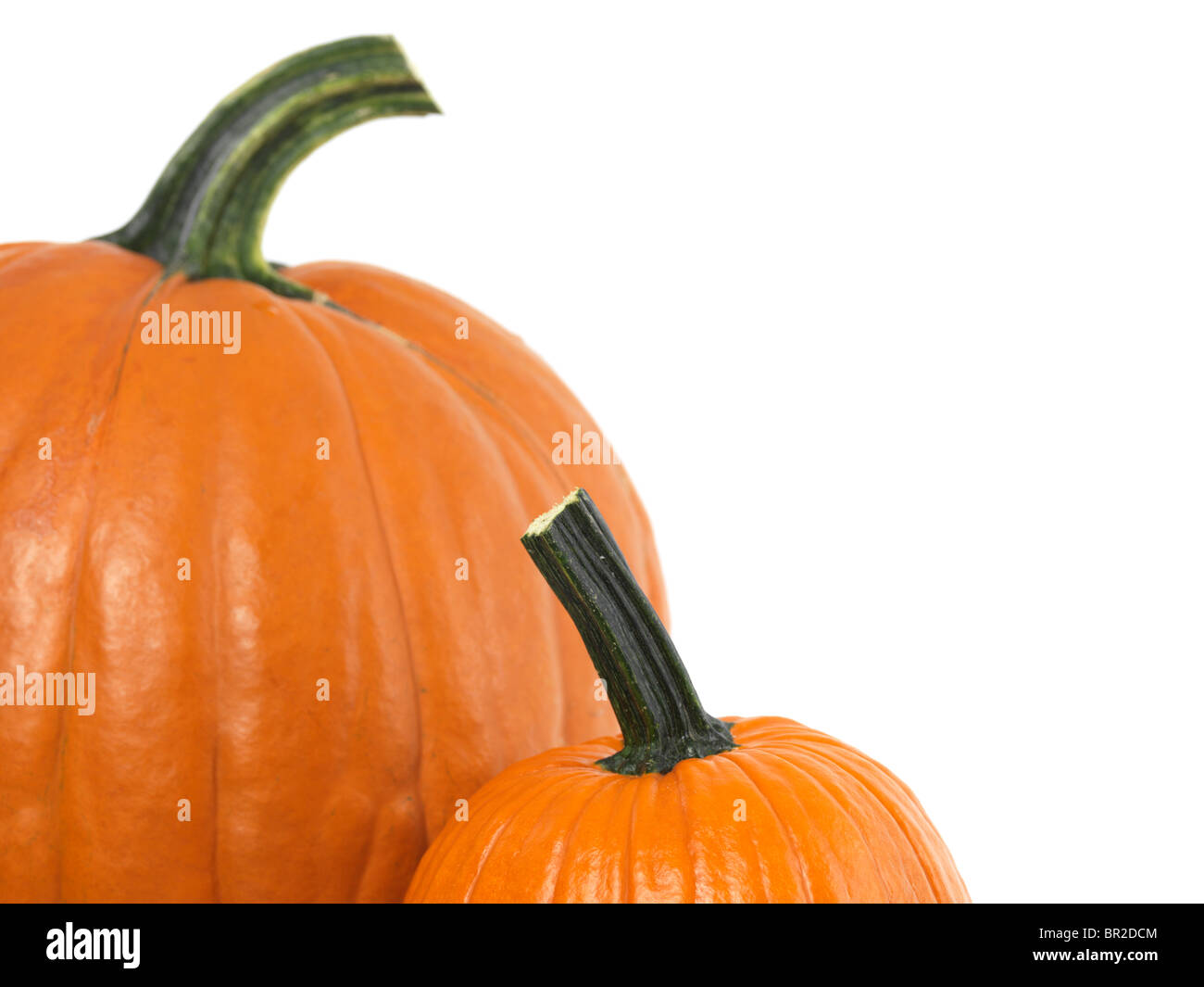 Closeup of two pumpkins isolated on white background - Stock Image