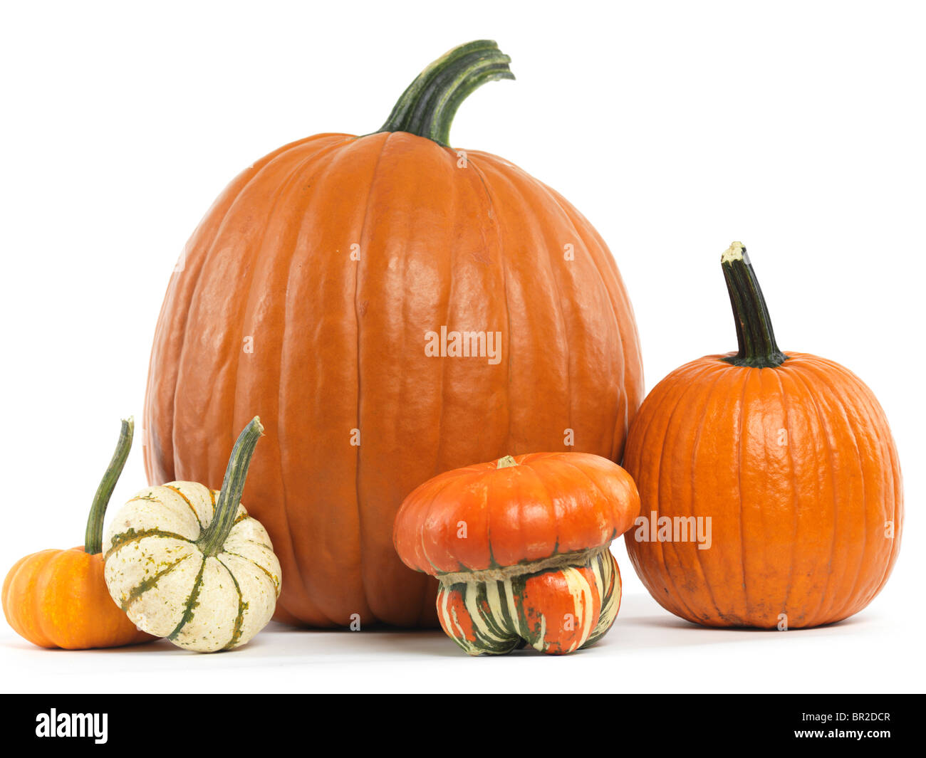 Pumpkins and gourds still life isolated on white background - Stock Image