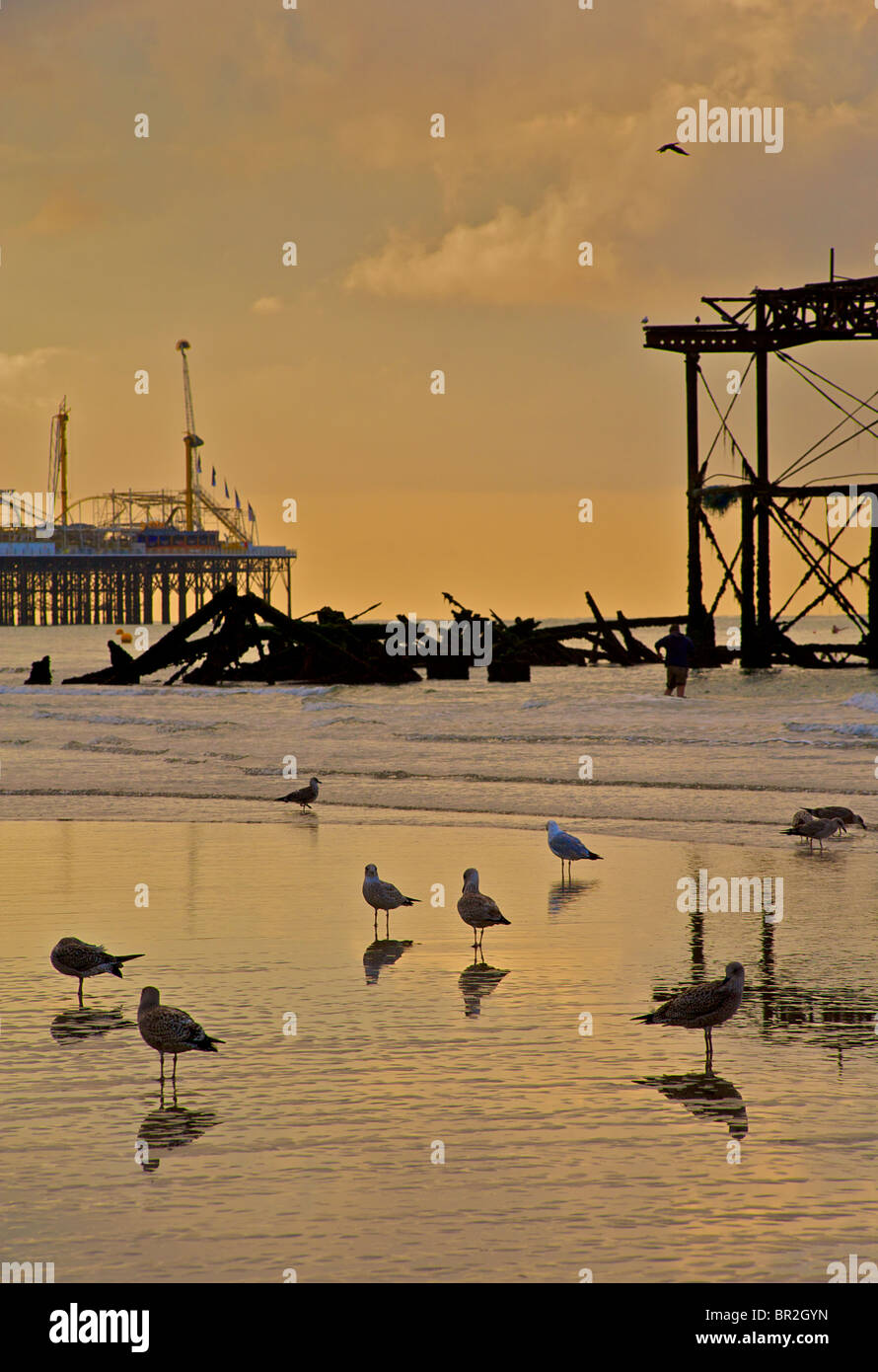 Silhouettes of seagulls and the dilapidated West Pier, Brighton. Low tide at sunrise. East Sussex, England - Stock Image