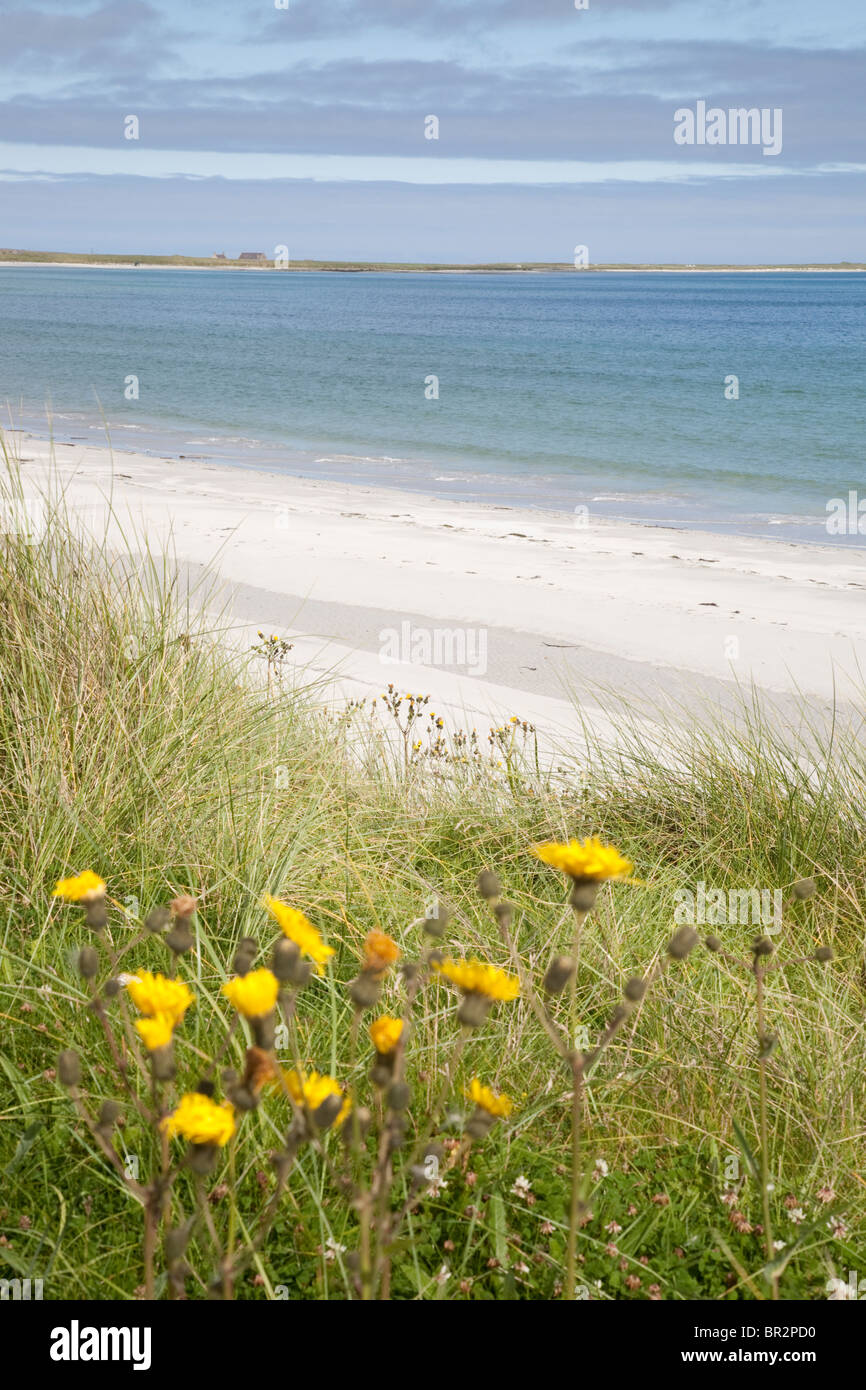 Bay of Lopness Beach, Sanday, Orkney Islands, Scotland - Stock Image
