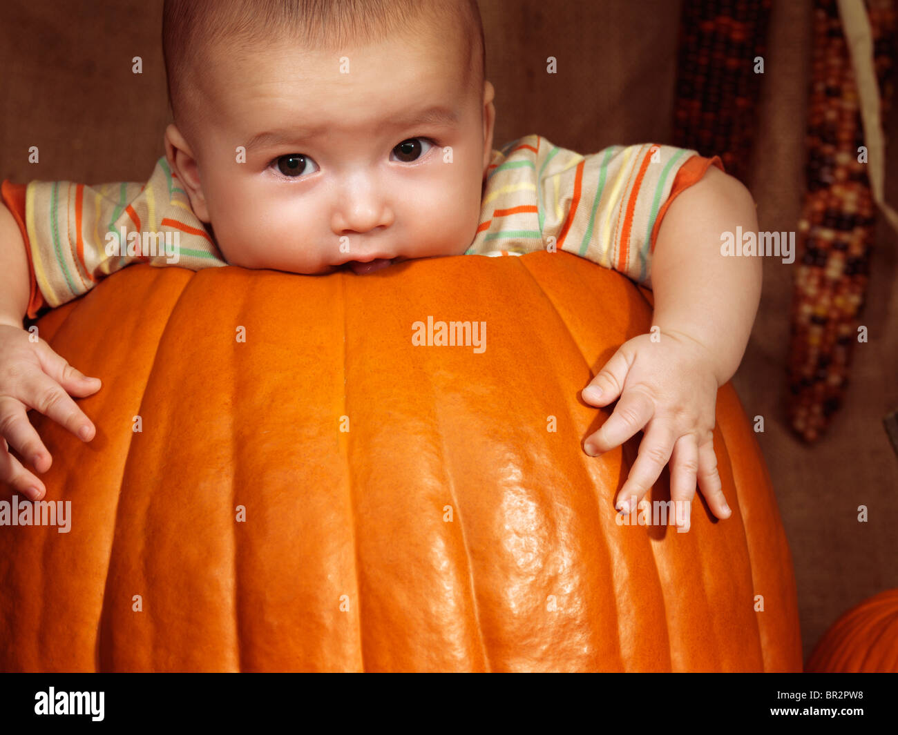 Baby boy sitting inside a big pumpkin. Fall season holidays Thanksgiving and Halloween humorous artistic portrait. - Stock Image