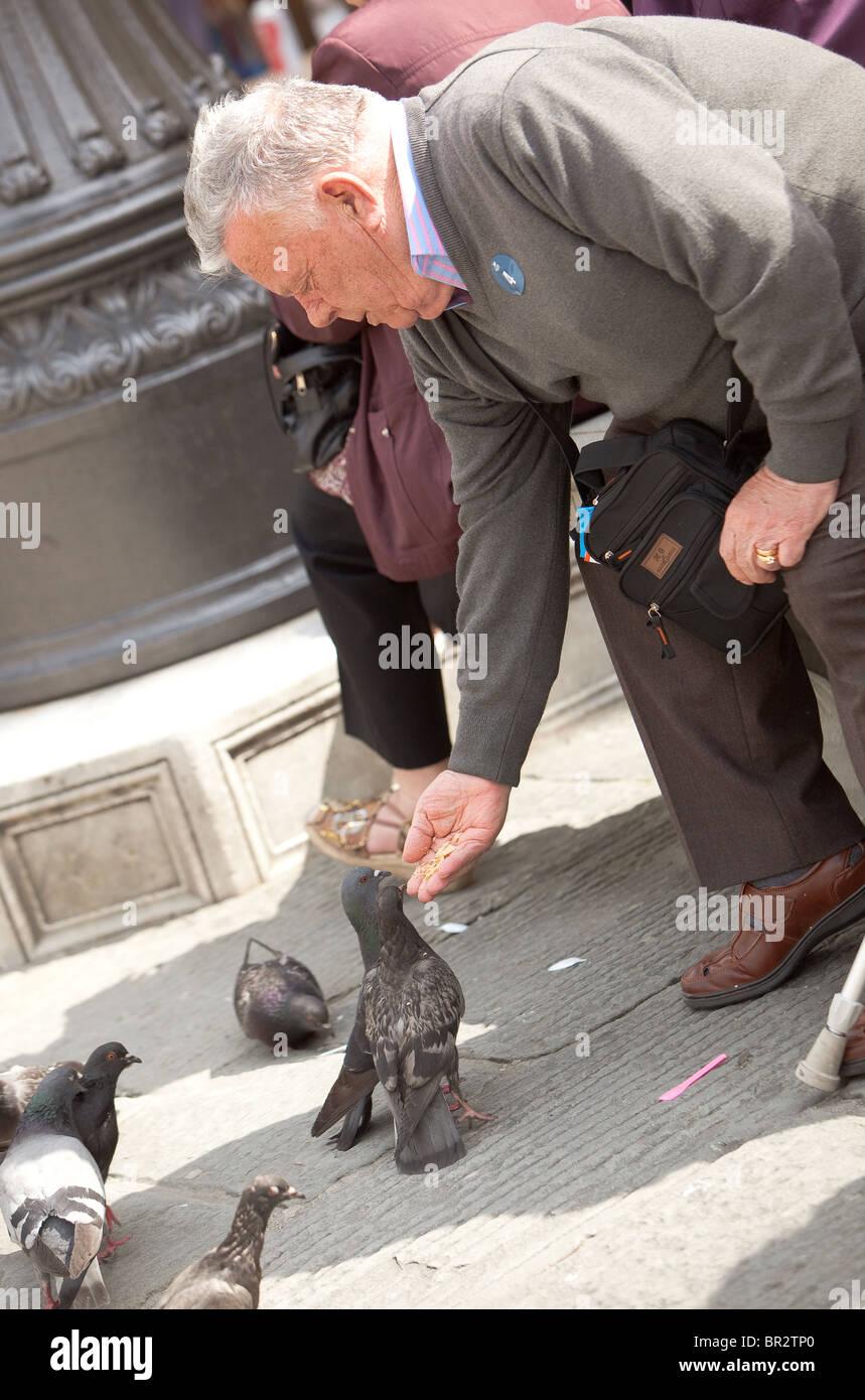Kind elderly man feeding the pigeons Florence Italy - Stock Image