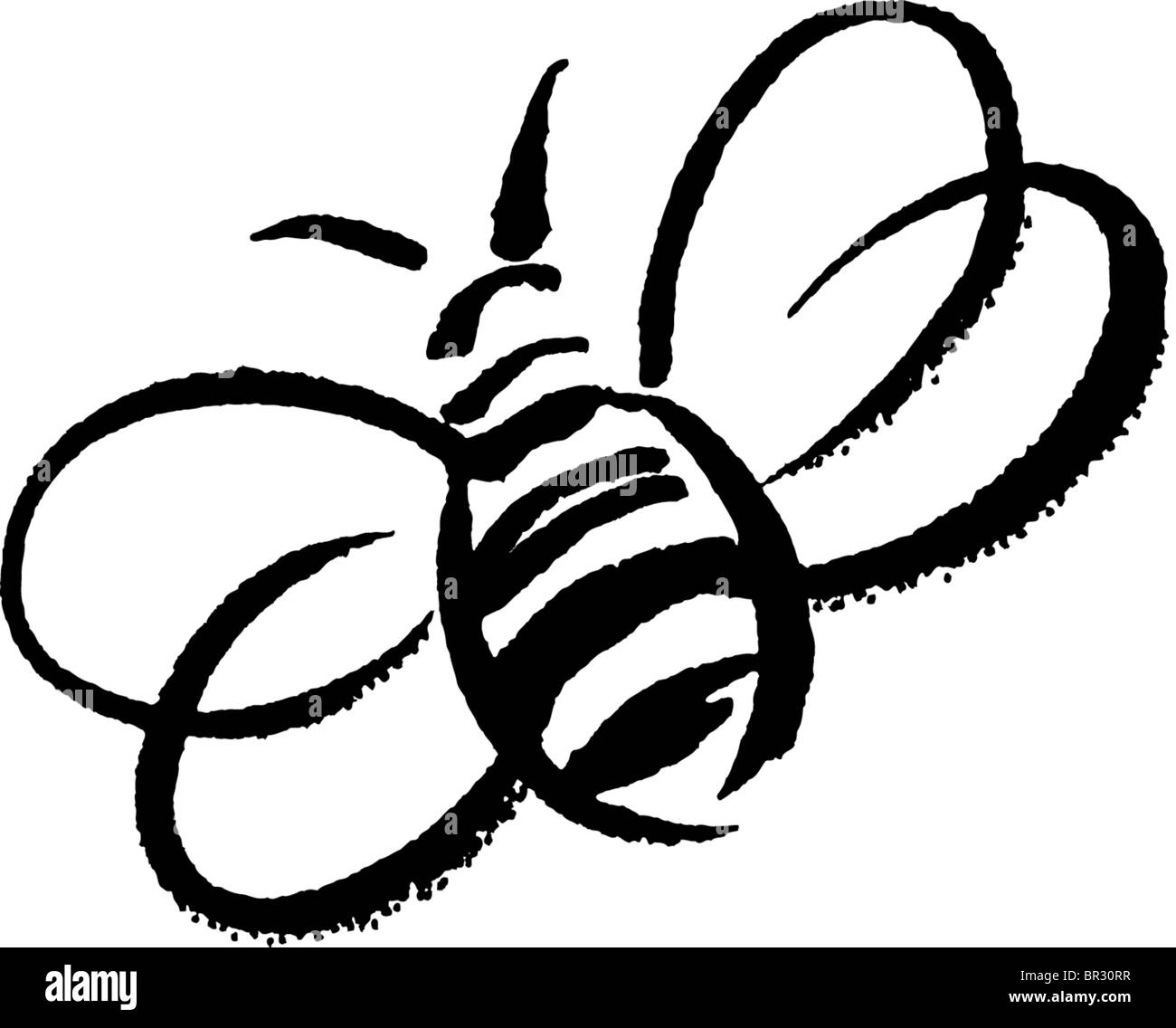 A black and white drawing of a bumblebee stock photo 31413979 alamy a black and white drawing of a bumblebee buycottarizona Gallery