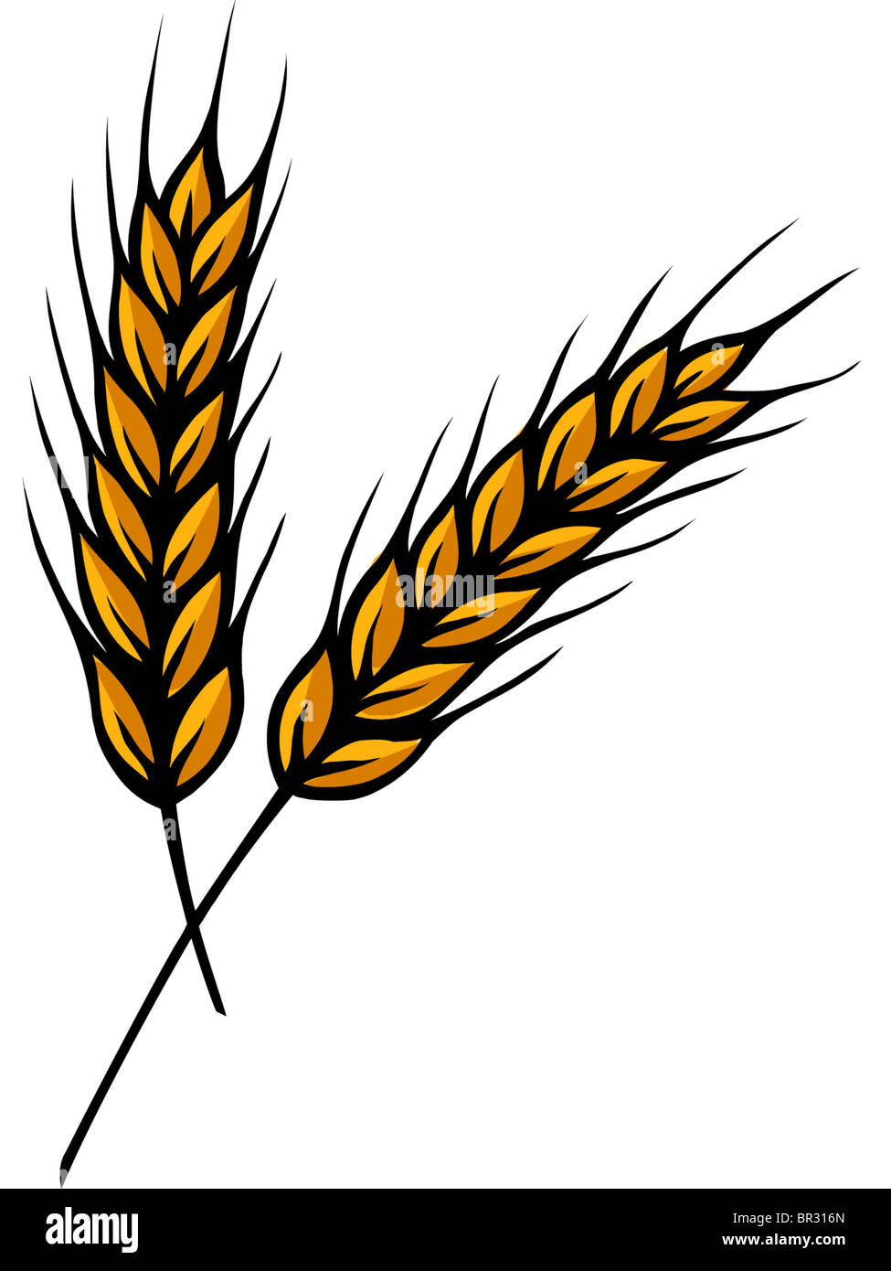 A Drawing Of Two Stalks Of Wheat Stock Photo 31414285 Alamy