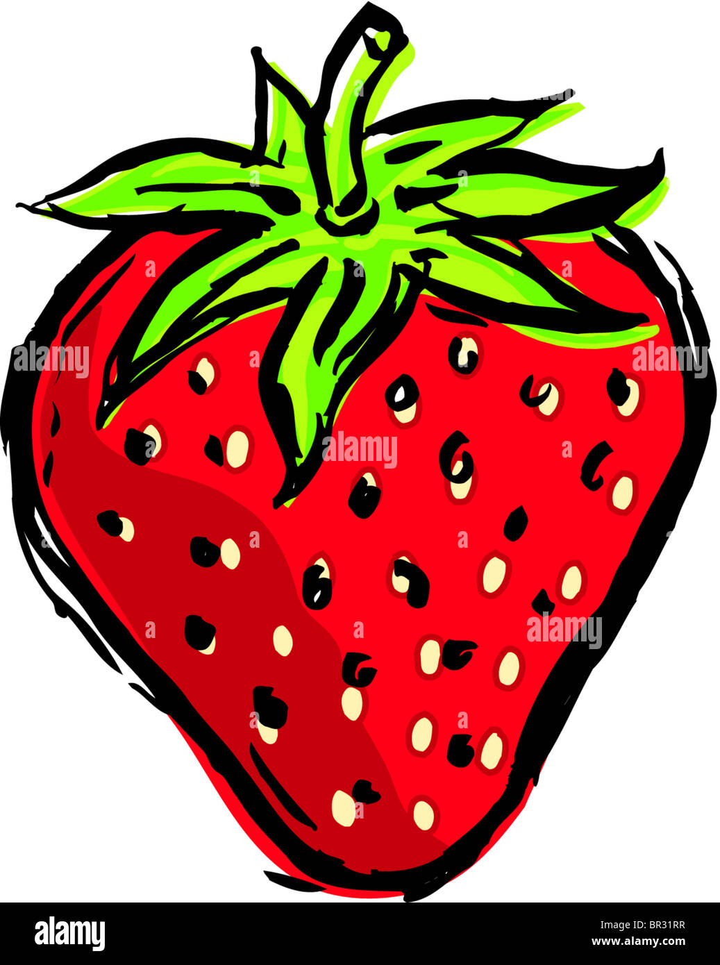 a drawing of one red strawberry stock photo 31414763 alamy healthy food clip art kids healthy food clipart images