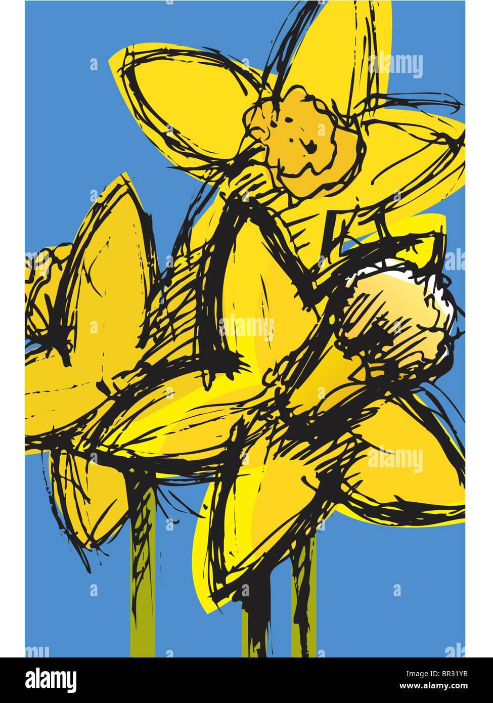daffodils - Stock Image