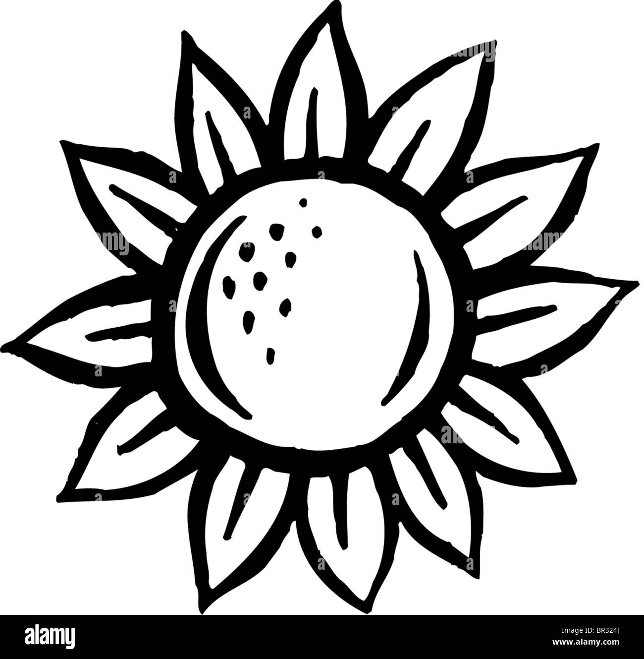 A Black And White Picture Of A Sunflower Stock Photo 31415010 Alamy
