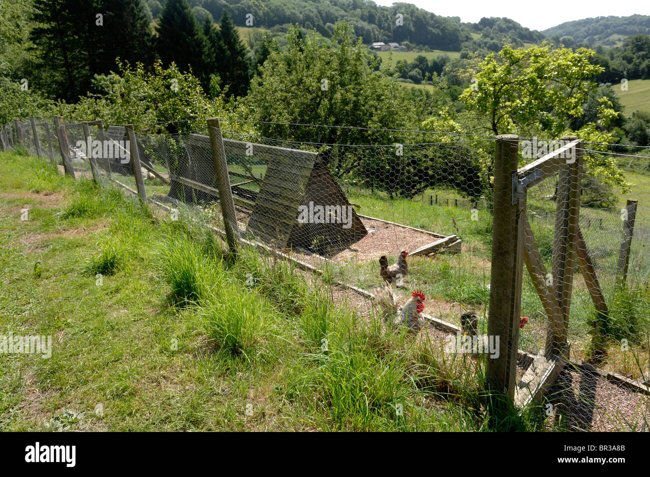 Pictureque domestic chicken runs and houses in a rural setting, Devon - Stock Image