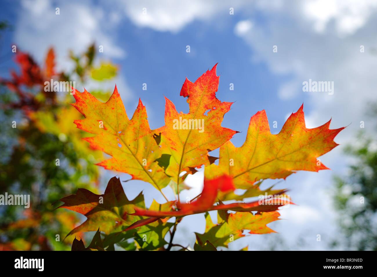 Colourful Autumn Leafs . - Stock Image