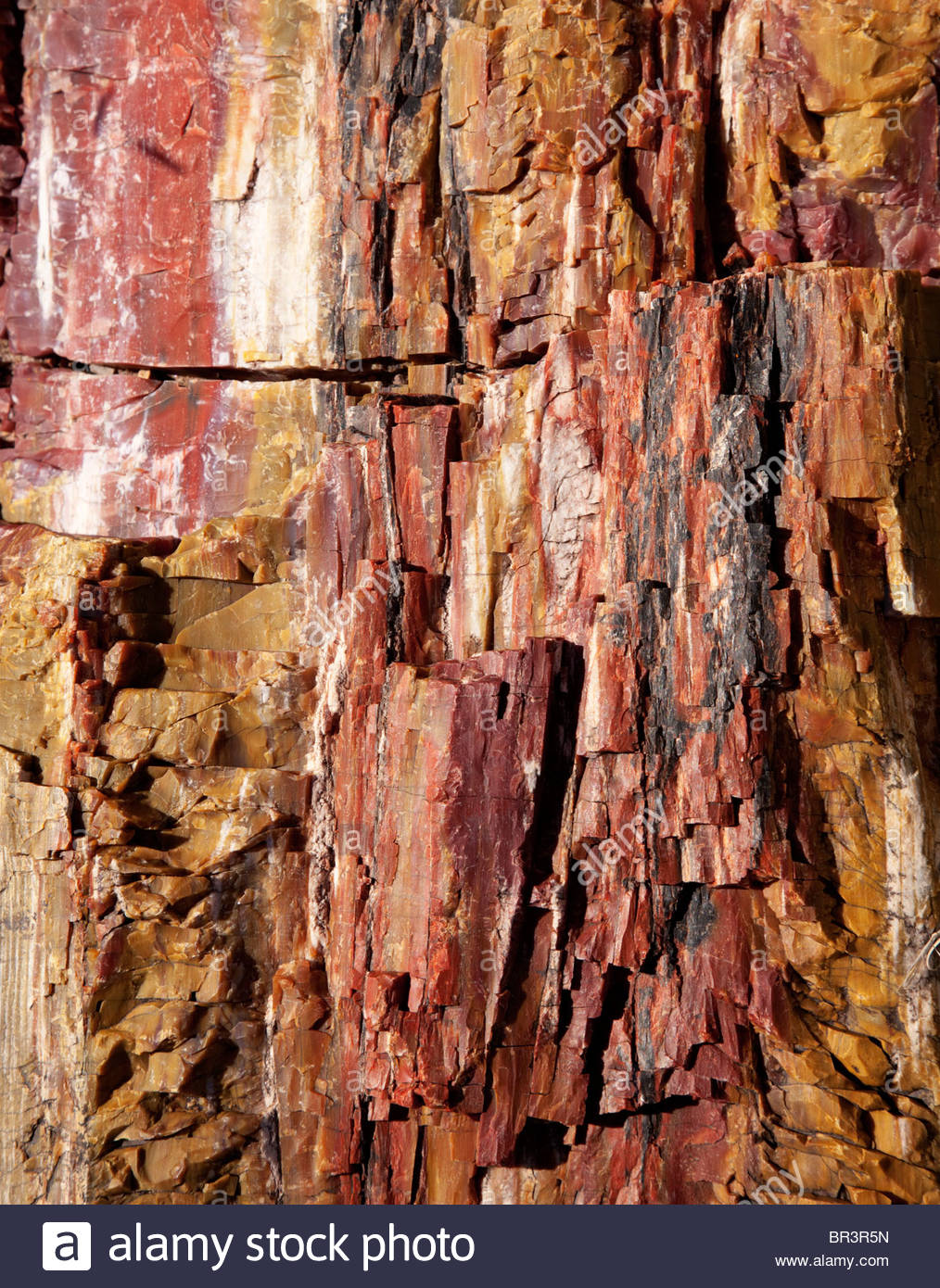 Petrified Wood  log Arizona - Stock Image