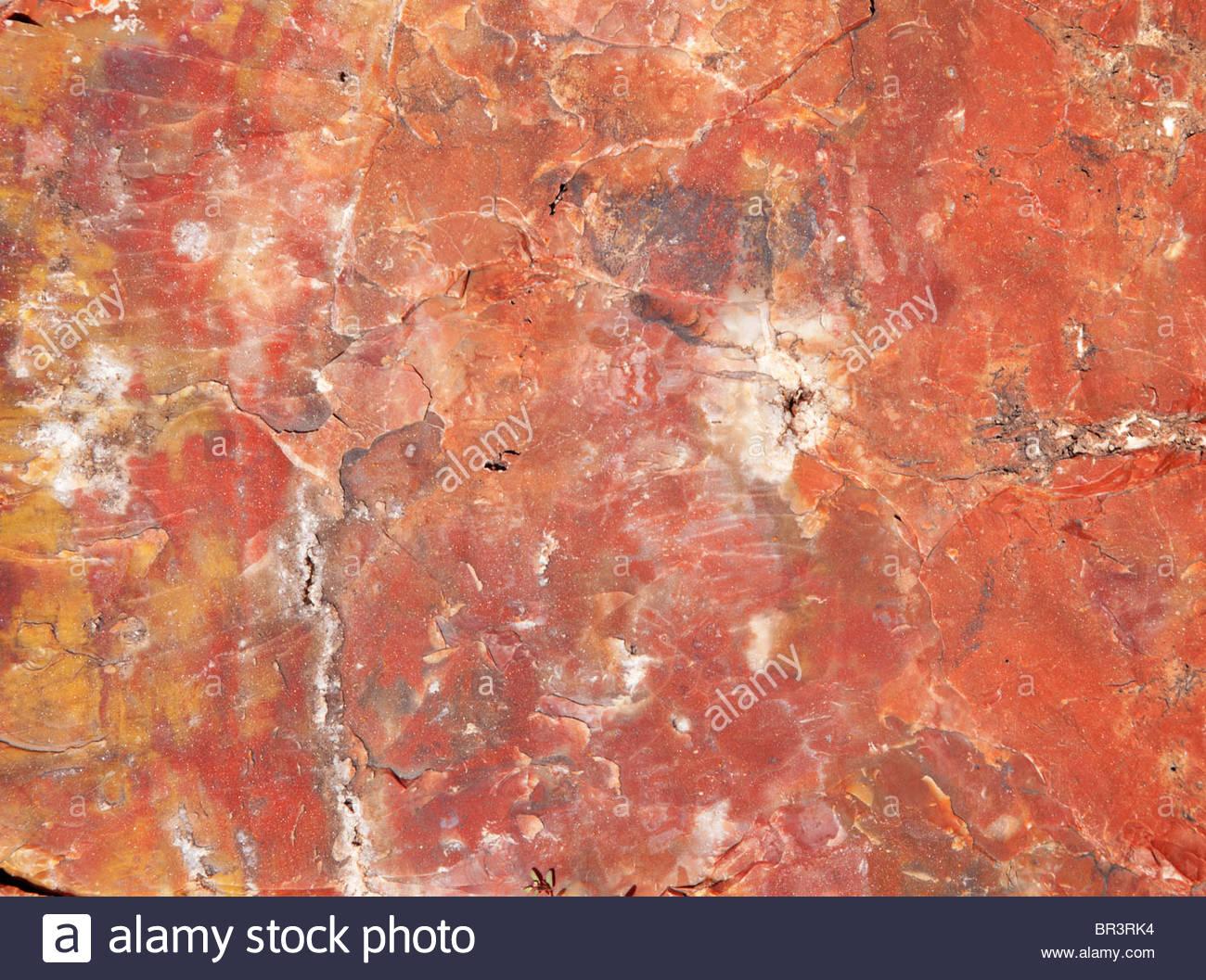 Petrified Wood end log Arizona - Stock Image
