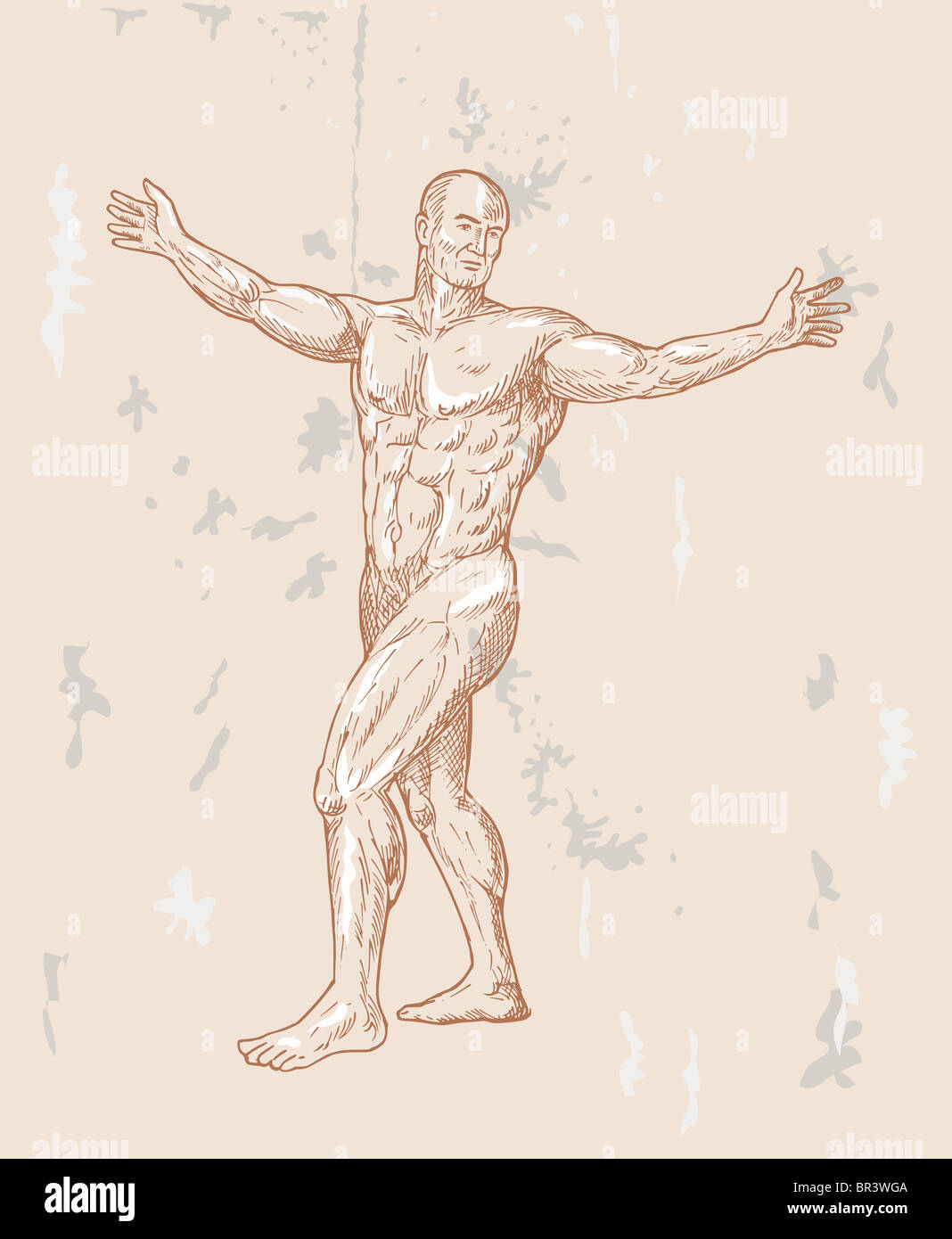Hand Sketched Illustration Of The Male Human Anatomy Done In Stock
