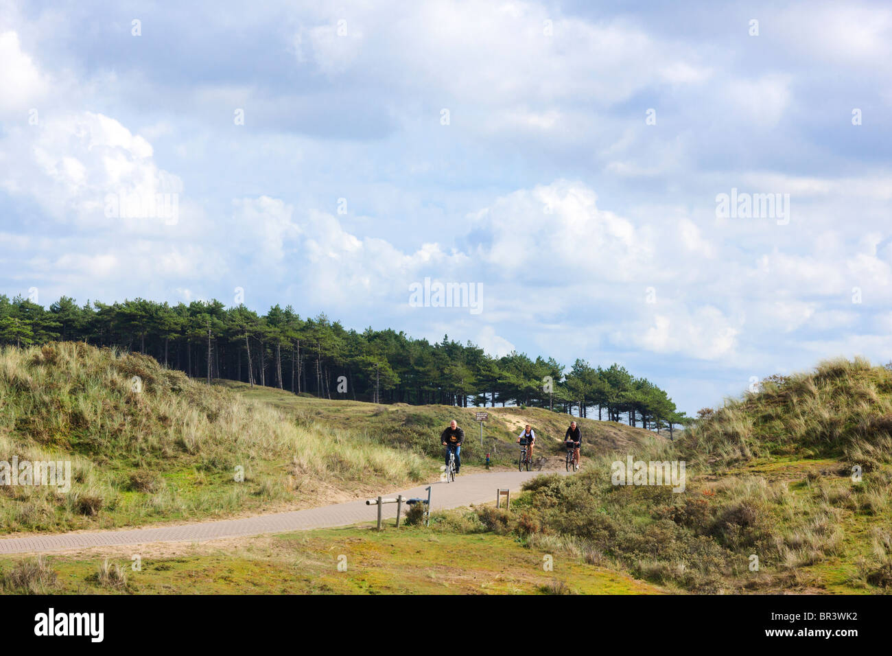 Bicycle path in the Kennemerduinen, the central part of South Kennemerland National Park nature reserve in the Netherlands. - Stock Image