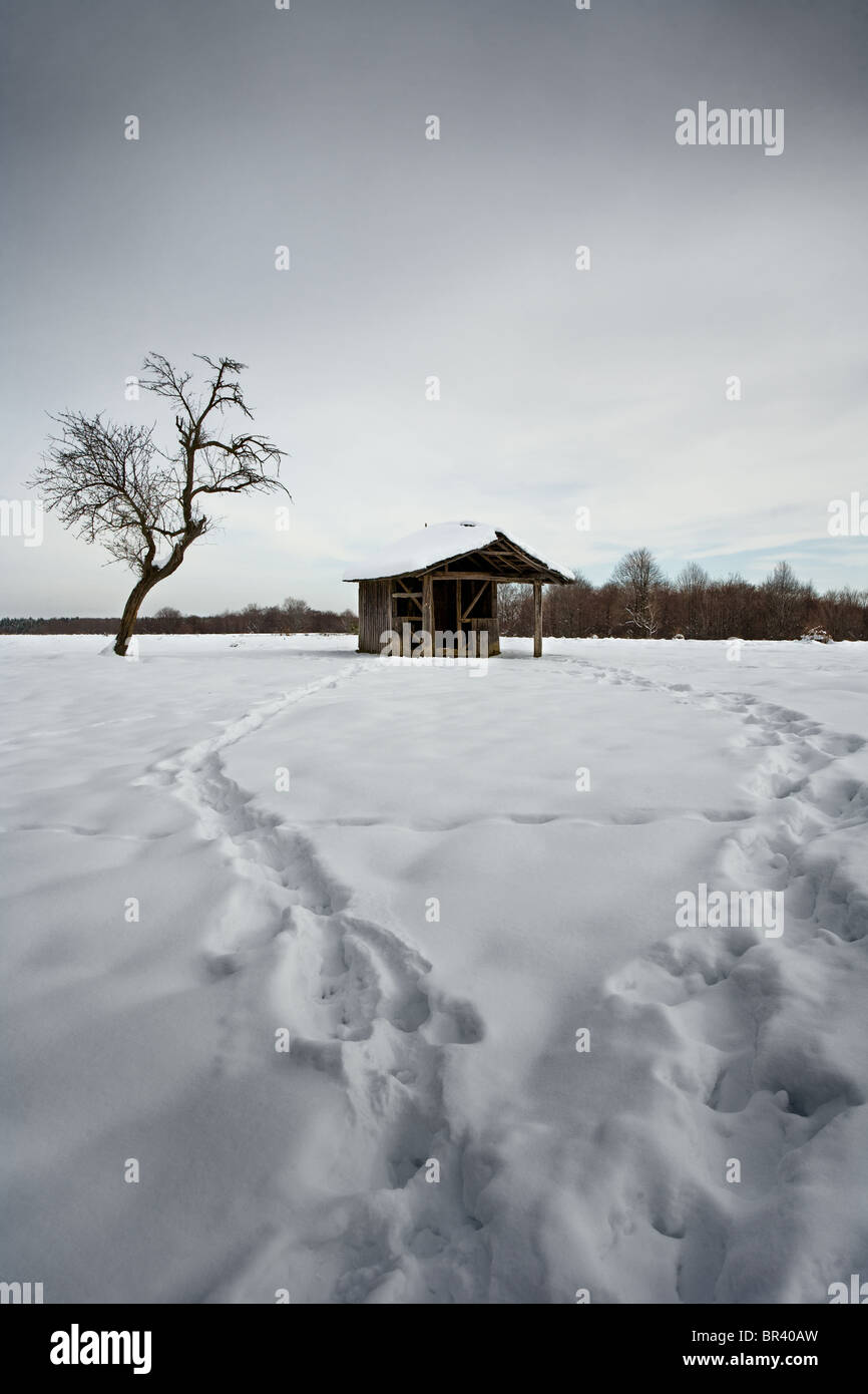 Landscape with a dead tree and a shelter, with footsteps trailing through snow - Stock Image