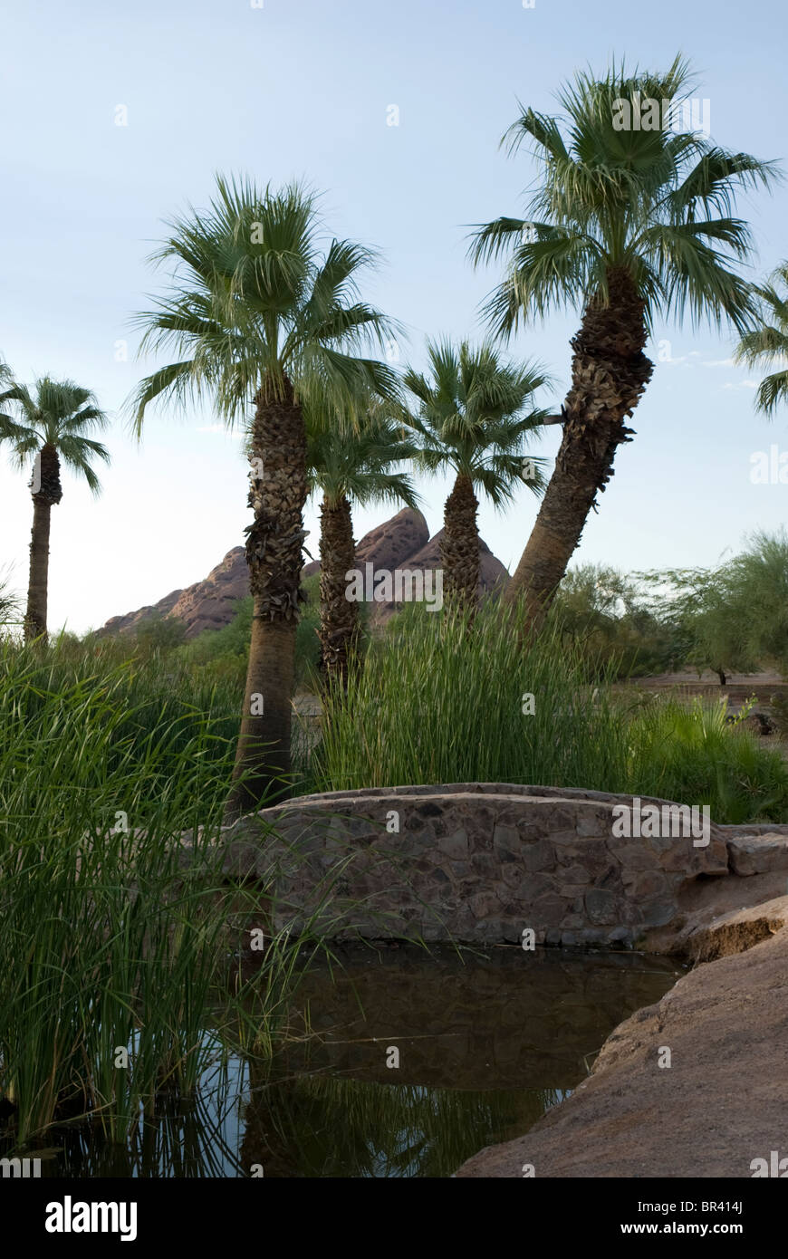 A bridge and a pond in a view of Papago Park in Phoenix and Tempe, Arizona, USA - Stock Image