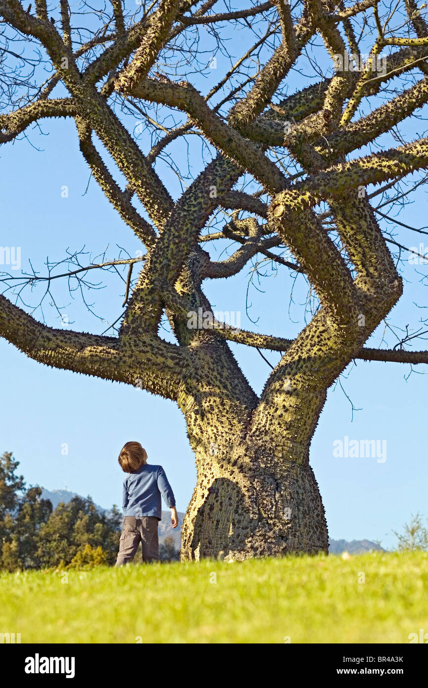 White Silk floss tree with young boy admiring it. - Stock Image