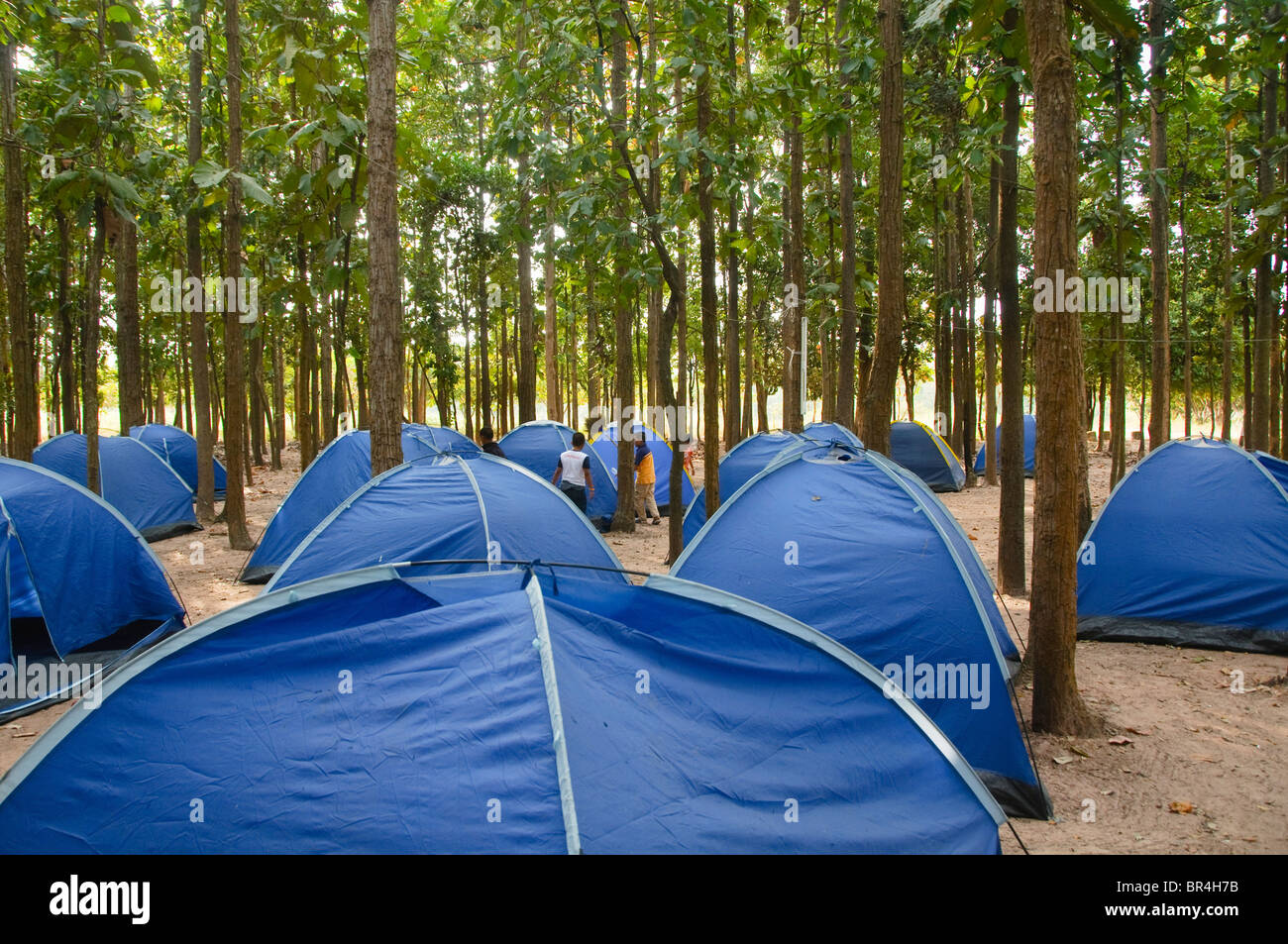 forest and tents at childrens camping trip in Thailand - Stock Image